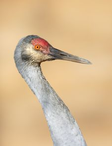 Free Big Grey Crane. Royalty Free Stock Images - 9697049