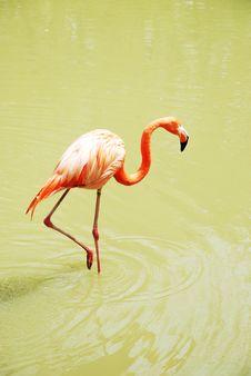 Free Flamingo 2 Stock Images - 9697224