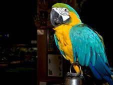 Free Parrot Stock Photos - 9697623