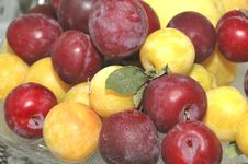 Free Red And Yellow Cherry Plum... Royalty Free Stock Images - 9698299
