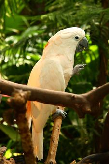 Free Parrot Royalty Free Stock Images - 9699889