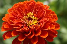 Free Flower, Orange, Petal, Annual Plant Royalty Free Stock Image - 96914916