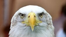 Free Bird, Beak, Bird Of Prey, Eagle Royalty Free Stock Photography - 96919347