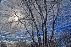 Free Sky, Branch, Tree, Winter Royalty Free Stock Photos - 96919348