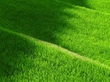 Free Grass, Green, Field, Lawn Royalty Free Stock Photo - 96920745