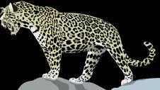 Free Leopard, Terrestrial Animal, Jaguar, Wildlife Royalty Free Stock Images - 96921399