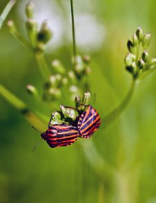 Free Insect, Butterfly, Nectar, Brush Footed Butterfly Stock Photos - 96927503