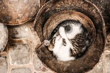 Free Black And White Long Coat Cat Sleeping On Brown Container Stock Image - 96933061