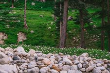Free Gray Rock Near Green Grass Lawn And Tall Trees Royalty Free Stock Images - 96933579