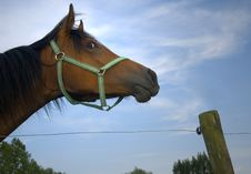 Free Staring Horse Royalty Free Stock Image - 970096