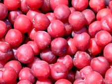 Free Plum Royalty Free Stock Images - 970409
