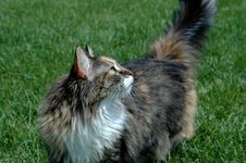 Free A Cat S Side Glance Stock Photo - 971330
