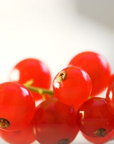 Free Red Currant Macro Stock Photo - 971560