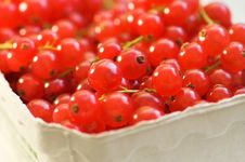 Free Red Currants Stock Photos - 971603