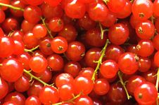 Free Red Currant Background Royalty Free Stock Image - 971636