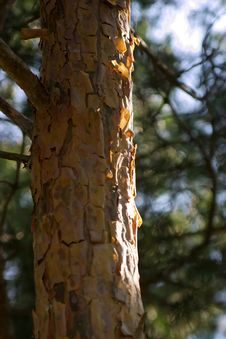 Free Wood Detail Stock Image - 971641