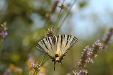 Free Butterfly Royalty Free Stock Images - 971759