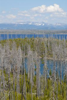 Free Yellowstone Lake Thru The Burnt Trees Stock Images - 972494