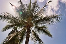 Free Old Palm Stock Photos - 972973