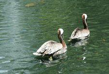 Free Twin Heron Stock Image - 972981