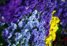 Free Colorfull Flowers Stock Photography - 973892