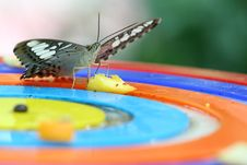 Free Butterfly Stock Photo - 974200