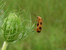 Free Bug And Flower Bud Stock Photos - 974603
