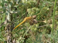Free Dragonfly Stock Image - 974801
