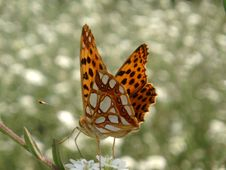 Free Butterfly Royalty Free Stock Photography - 975087