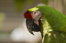 Free Green Macaw In The Sun Stock Images - 975194