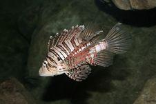 Free Aquarian Fish Stock Image - 975311