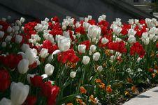 Free Flower Garden Stock Photography - 975542
