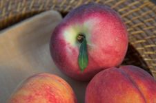Free Summer Peaches Royalty Free Stock Photo - 975635