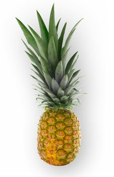 Free Isolated Pineapple Stock Images - 976484