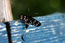 Free Black Butterfly On Blue Stock Photography - 976662