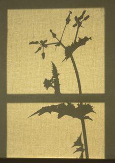 Plant Silhouette Royalty Free Stock Photos
