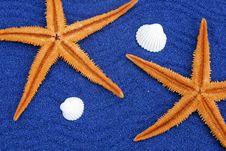 Free Starfish Stock Photography - 976882