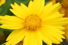 Free Yellow Flower Stock Images - 978684
