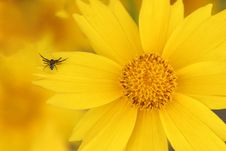 Free Yellow Flower And Spider Stock Photo - 978690