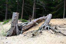 Free Woods On Lake Superior Shore Stock Image - 978731