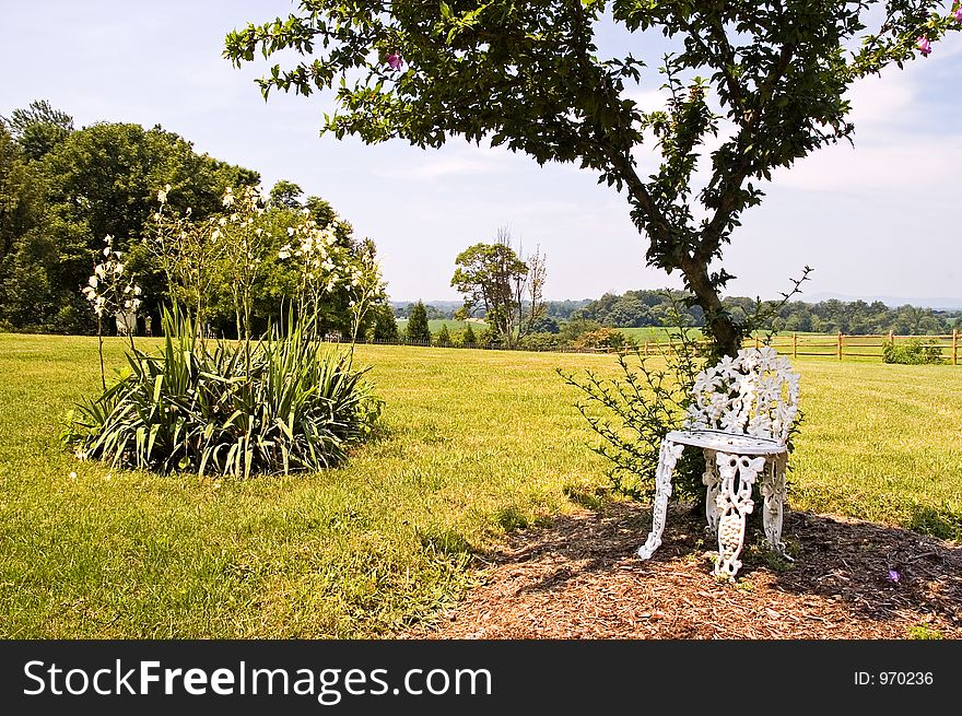 Chair Under Tree