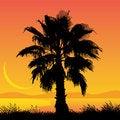 Free Palm Tree Royalty Free Stock Image - 9703626