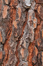 Free Tree Bark Texture Stock Photos - 9706383