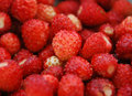 Free Strawberries Royalty Free Stock Photography - 9706457