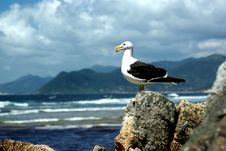 Free Lonely Seagull Royalty Free Stock Images - 9700099