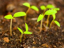 Free Green Sprout Stock Image - 9700481