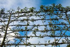 Free Trellis Stock Photo - 9701590