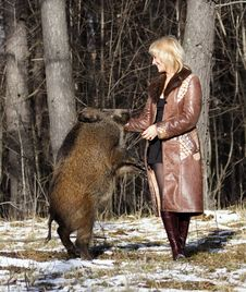 Free Blonde Girl With Wild Boar Stock Photo - 9702560