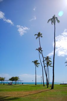 Free Hawaii Waikiki Royalty Free Stock Photography - 9703317
