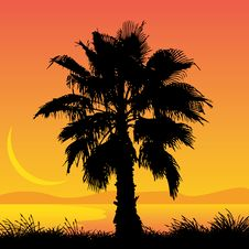 Free Palm Tree Royalty Free Stock Image - 9703626